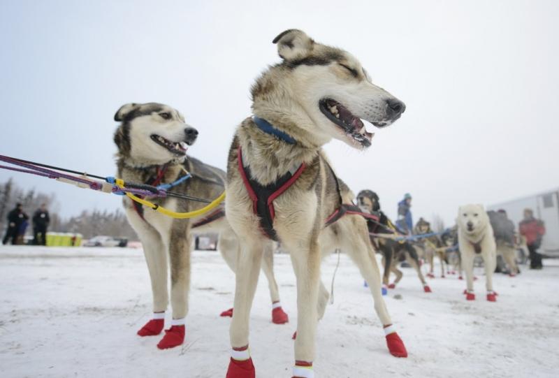 Над 500 кучета се включиха в ултрамаратон в Алпите