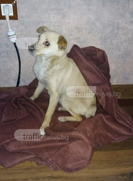 Пловдивчанка спаси куче от замръзване! Търси му нов дом СНИМКИ