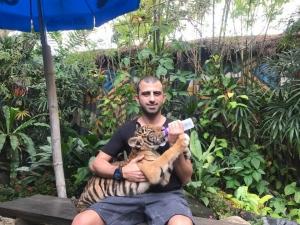 Мудката гушка тигри в Тайланд СНИМКИ