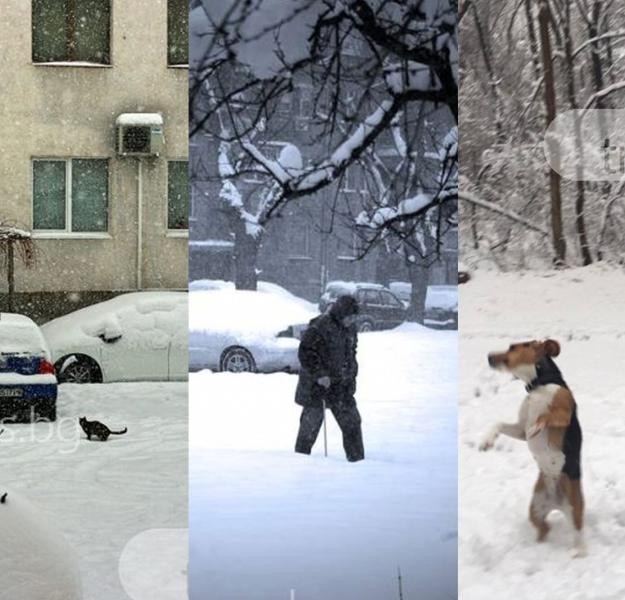 Сняг, студ, гневни хора, щастливи деца и още по-щастливи кучета - Пловдив днес СНИМКИ