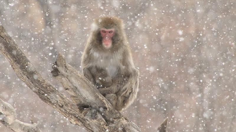 Маймуните в пловдивския зоопарк се топлят с климатици, кучетата - с инфрачервени лампи