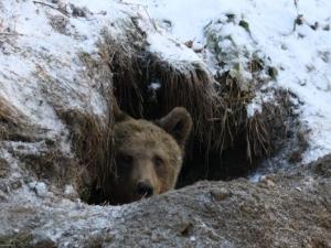 6-годишният Васко се събуди от зимен сън, мажат му филии с шипков мармалад