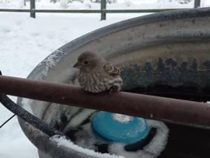 Благородно! Мъж спаси замръзнало врабче с дъха си