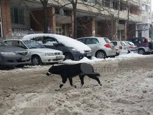 Жестока гавра и садизъм в Пловдив! Завързаха с парцал муцунката на куче СНИМКИ