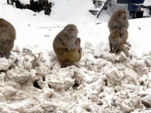 И настана... маймунски студ!
