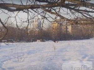Глутница кучета дебнат за жертви в Кючука ВИДЕО