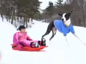 Куче помогна на болно момиченце да живее ВИДЕО