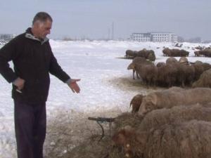 Овчар от Пловдивско готви бунт, стадото му бедства заради бюрокрацията у нас