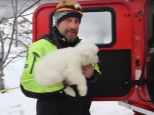 Спасиха три кученца от затрупания от лавина хотел ВИДЕО