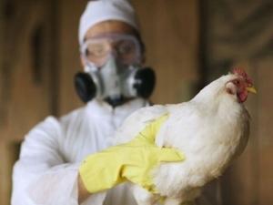 Откриха нов щам на птичия грип