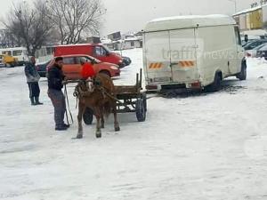 Мъчение над животно: Накараха кон да тегли микробус в Пловдив ВИДЕО