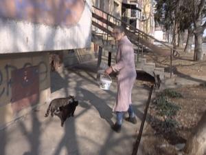 100 лева глоба за пенсионерка - хранила бездомни котки