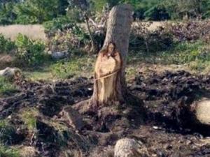 Чудо! Исус Христос се появи върху... ствол на дърво ВИДЕО