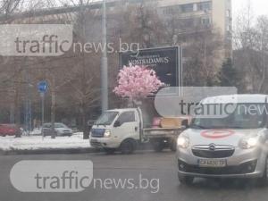 Розово дърво се понесе феерично по улиците на Пловдив - оказа се шопинг маниак СНИМКИ