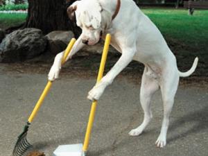 Слалом по тротоарите заради стотици кучешки изпражнения