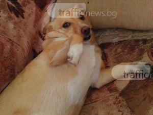 Брутално: Отровиха още едно домашно куче в Пловдив! СНИМКА