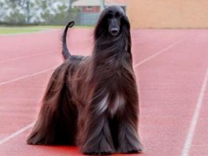 Елитни кучета от няколко държави идват за изложба в Пловдив