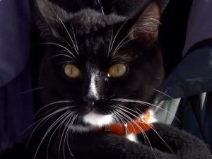 Граф - котката, която изкачва планински върхове