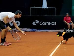 Кучета ще гонят топките на тенис турнир ВИДЕО
