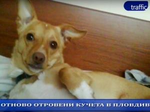 ОБЗОР НА ДЕНЯ: Отново отровени кучета в Пловдив! (ВИДЕО)