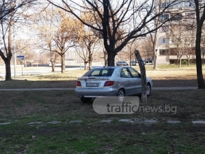 Ситроен кацна на дърво в Пловдив СНИМКИ