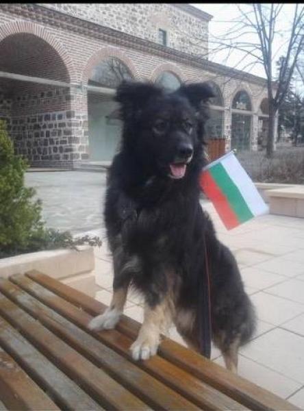 Забавни патриотични снимки на кучета пълнят Фейсбук