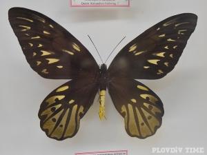 Най-големите пеперуди на света кацнаха в Пловдив СНИМКИ+ВИДЕО