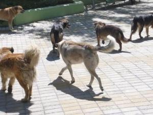 Глутница кучета нахапаха зверски дядо в центъра на Хасково СНИМКИ