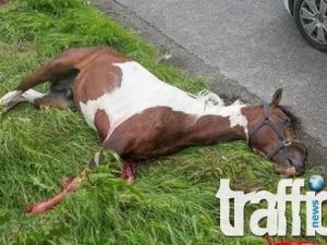 62-годишен с мерцедес връхлетя върху кон на платното! Животното е мъртво