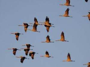2 милиона прелетни птици избити в Кипър и изпратени като деликатес в Англия