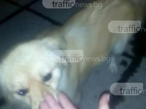 Жестоко! Пловдивчани изхвърлиха кучето си през колата пред магазин ВИДЕО