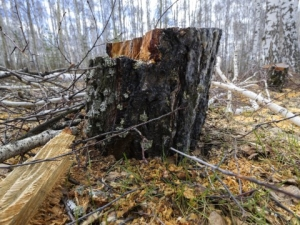 Огромно дърво падна върху група гимназисти, 18 души загинаха