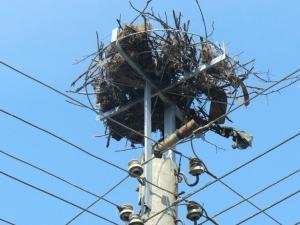 Mонтираха нови 242 платформи за щъркелови гнезда