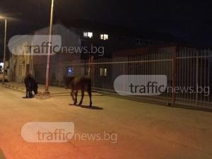 Топлото време в Пловдив изкара дори магаретата по улиците СНИМКИ