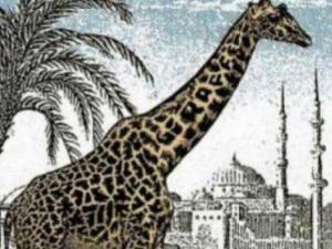 Опитайте се да откриете втория жираф на СНИМКАТА