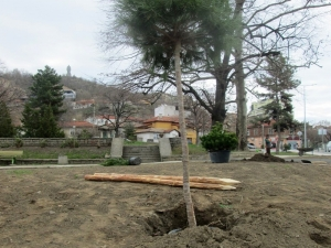 """Вандали задигнаха цяло дърво от булевард """"Васил Априлов"""""""