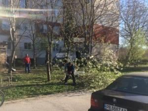 Пловдивчанин хвана резачката и отряза дърветата пред блока си, щял да ги гори СНИМКИ