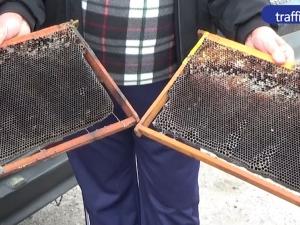 Медът край Пловдив става на гипс заради праха ВИДЕО