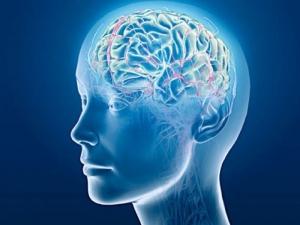 10 удивителни факта за човешкия мозък