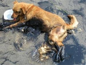 Заляха кученце с разтопен асфалт, животинката бере душа СНИМКИ