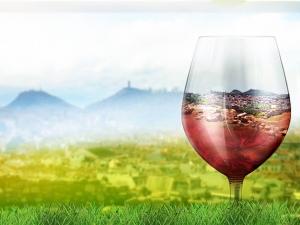 Над 50 вида вина ще изкушават пловдивчани през уикенда