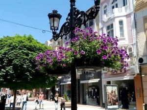 Висящи кошници с цветя отново красят Пловдив СНИМКИ
