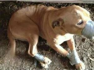 Садистично! Мъж завърза с тиксо куче, превърна го в боксова круша СНИМКА