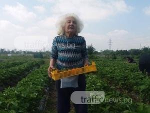 82-годишна жена от Пловдив всяка сутрин става в 6:00 часа, за да бере ягоди СНИМКИ