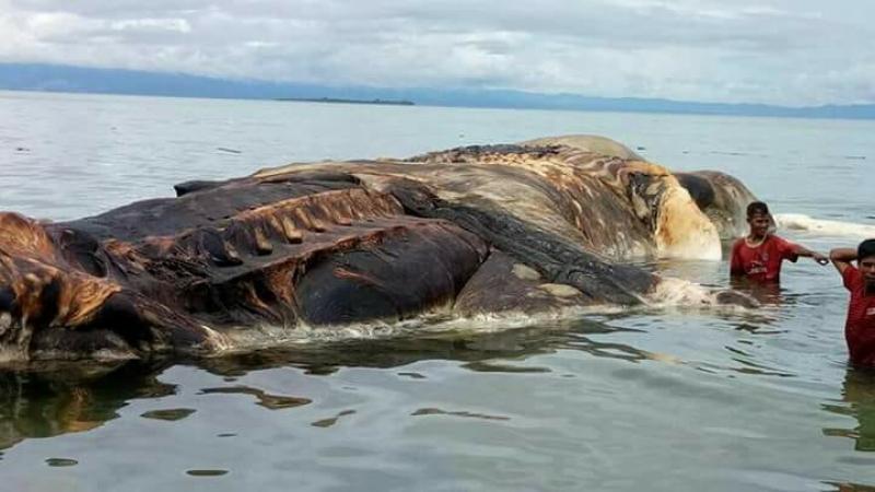 Мистериозно същество изплува на брега в Индонезия ВИДЕО