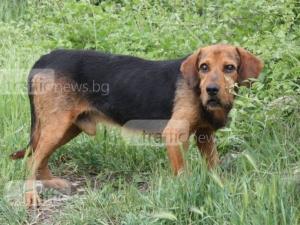 Гавра! Пловдивчани изхвърлиха кучето си, защото е сляпо СНИМКИ