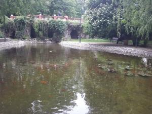 Златни рибки до Мечката в Цар-Симеоновата градина СНИМКИ