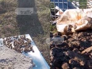 Хиляди пчели измряха край Пловдив заради опасни отпадъци! Има ли общо биоцентралата? ВИДЕО и СНИМКИ