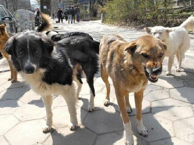 Освирепели кучета тормозят пловдивчани до социалните къщи в Източен