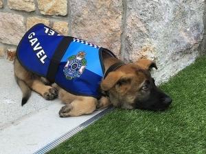 Уволниха полицейско куче от работа! Било много....мило СНИМКИ+ВИДЕО